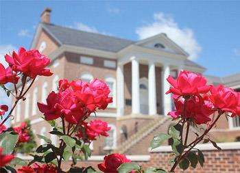 Red Rose Festival